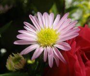 Flores de amor de Oscar Wilde