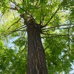 """De un árbol"" de Magaly Salazar"