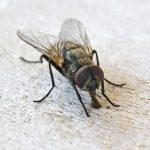 """""""Las moscas"""" de Antonio Machado"""