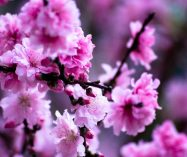 """La primavera"" de William Blake"