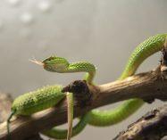 """""""Esbozo de una serpiente"""" de Paul Valéry"""