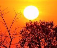 """""""Sol"""" de Francis Jammes"""