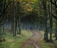 """""""El bosque amigo"""" de Paul Valéry"""