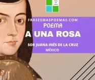 """""""A una rosa"""" de Sor Juana Inés de la Cruz"""