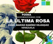 """""""La última rosa"""" de Ángel Marino Ramírez V. (Poema)"""